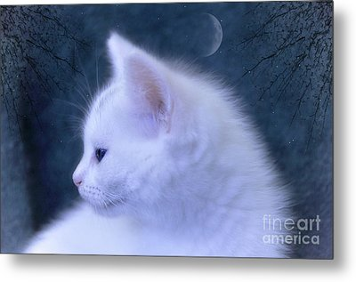 White Kitten At Night Metal Print