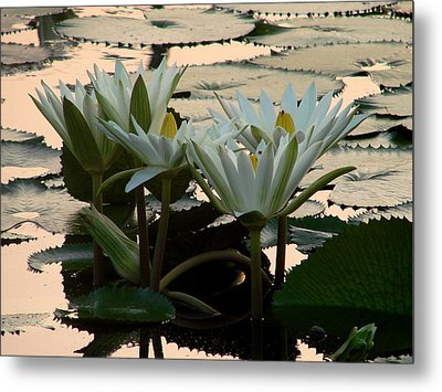 White Lillies Metal Print by Kimberly Camacho