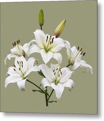 White Lilies Illustration Metal Print