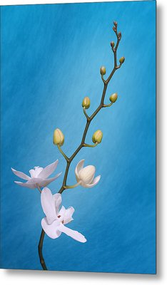 White Orchid Buds On Blue Metal Print