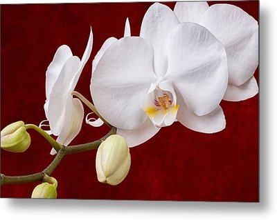 White Orchid Closeup Metal Print