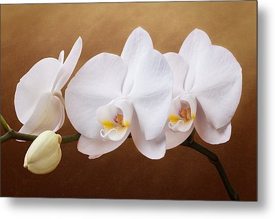 White Orchid Flowers And Bud Metal Print