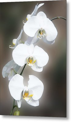 White Orchid Flowers Metal Print by Art Spectrum