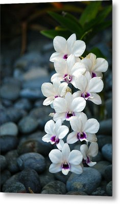 Metal Print featuring the photograph White Orchids by Debbie Karnes