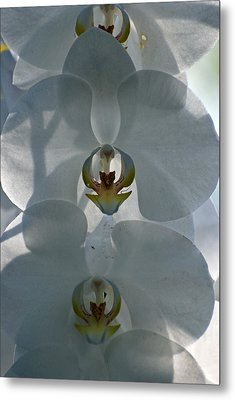 Metal Print featuring the photograph White Orchids  by Teresa Blanton