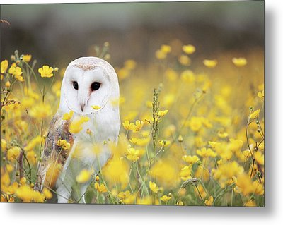 White Owl Metal Print by Happy Home Artistry