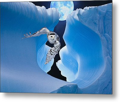 White Owl Metal Print by Jack Zulli