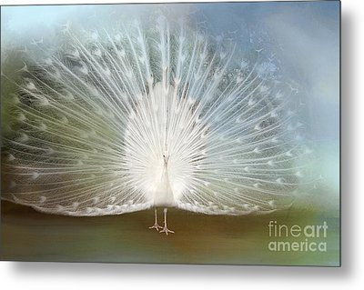 Metal Print featuring the photograph White Peacock In All His Glory by Bonnie Barry