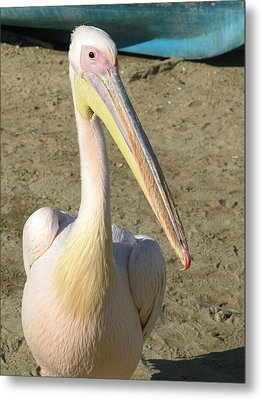 Metal Print featuring the photograph White Pelican by Sally Weigand