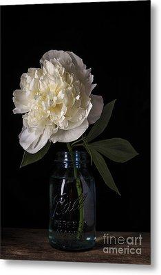White Peony Flower Metal Print by Edward Fielding