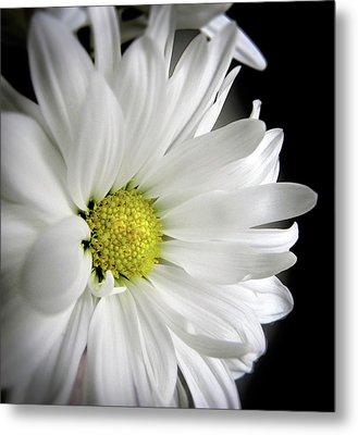White Petals Metal Print by Julie Palencia