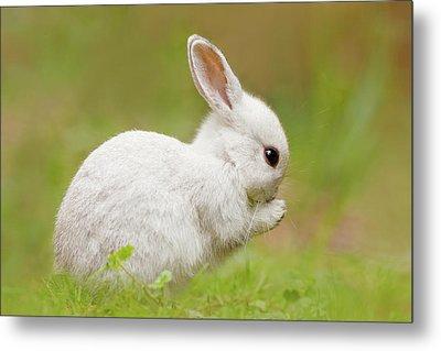 White Rabbit - Cute Overload Metal Print by Roeselien Raimond