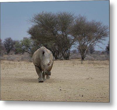 White Rhino 1 Metal Print by Ernie Echols