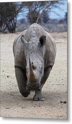 White Rhino 3 Metal Print by Ernie Echols