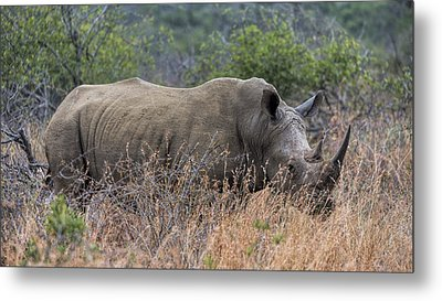 White Rhino Metal Print by Stephen Stookey