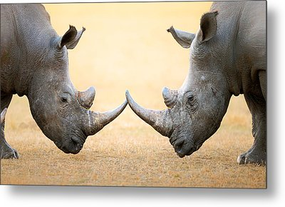 White Rhinoceros  Head To Head Metal Print by Johan Swanepoel