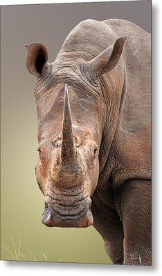White Rhinoceros Portrait Metal Print