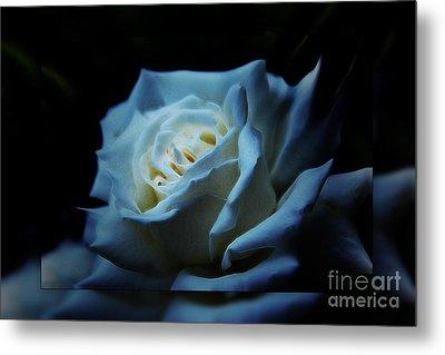White Rose 2 Metal Print