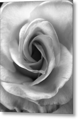 White Rose Metal Print by Beverly Johnson