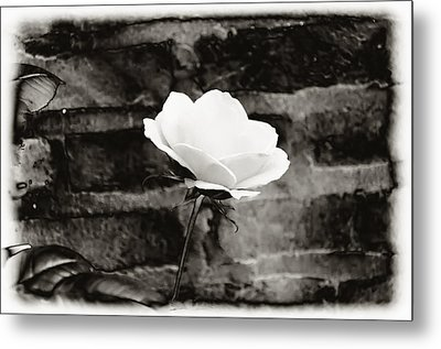 White Rose In Black And White Metal Print by Bill Cannon