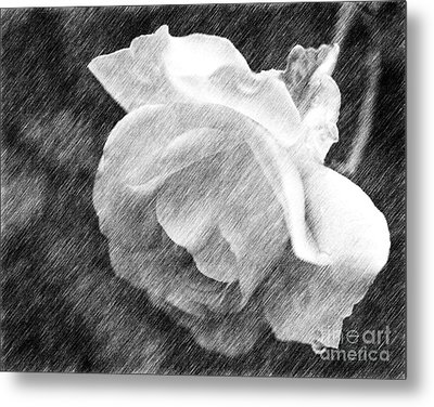 Metal Print featuring the drawing White Rose In Pencil by Smilin Eyes  Treasures