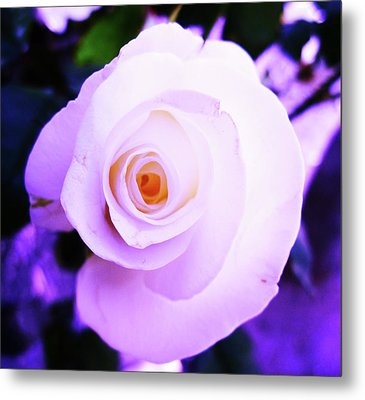 Metal Print featuring the photograph White Rose by Mary Ellen Frazee