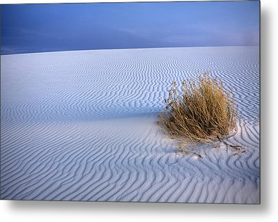White Sands Scrub Metal Print by Peter Tellone