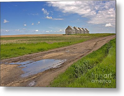 White Sheds On A Prairie Farm In Spring Metal Print by Louise Heusinkveld