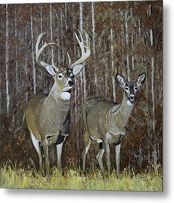 White Tail Couple 24x 24x3/4 Inch Oil On Canvas Metal Print