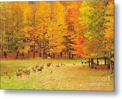 White Tail Deer Herd Metal Print by Terri Gostola