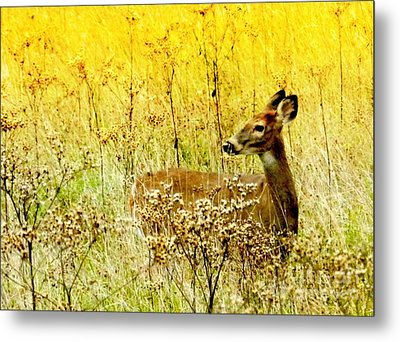 White Tail Doe On Alert Metal Print