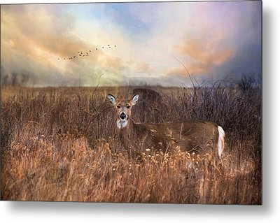 Metal Print featuring the photograph White Tail by Robin-lee Vieira