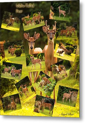 Metal Print featuring the photograph White-tailed Collage by Angel Cher