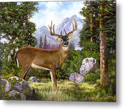 White Tailed Deer Metal Print by Robert May