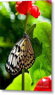 White Tree Nymph Butterfly 1 Metal Print by Terry Elniski