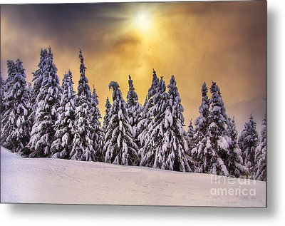 White Trees Metal Print by Alessandro Giorgi Art Photography