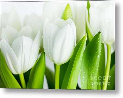 White Tulips Metal Print by Nailia Schwarz