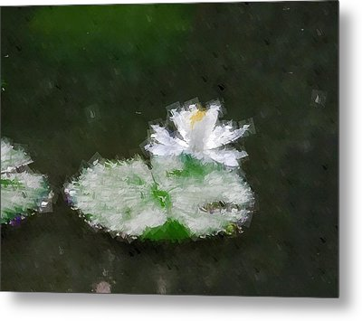 White Water Lily And Leaf Metal Print