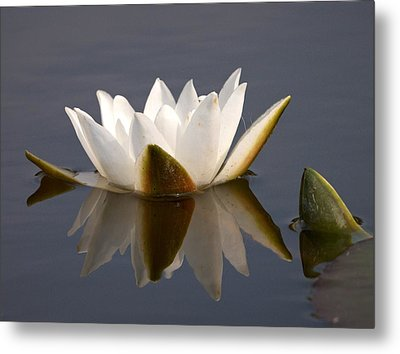 Metal Print featuring the photograph White Waterlily 2 by Jouko Lehto