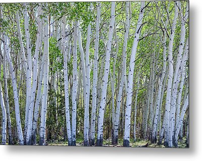White Wilderness Metal Print by James BO Insogna