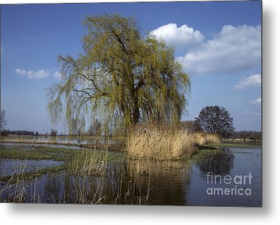 White Willow Metal Print by Jean-Louis Klein & Marie-Luce Hubert