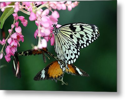 White Winged Butterfly Metal Print