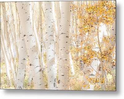 White Woods Metal Print