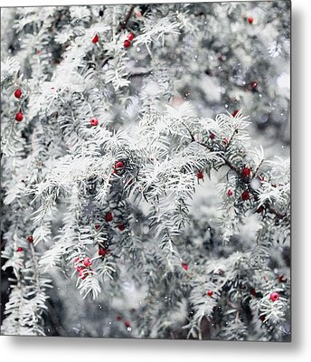 White Yew Metal Print by Helga Novelli