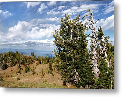 Whitebark Pine Trees Overlooking Crater Lake - Oregon Metal Print by Christine Till