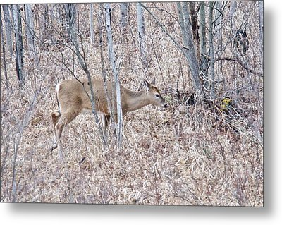 Metal Print featuring the photograph Whitetail Deer 1171 by Michael Peychich