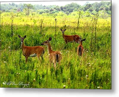 Metal Print featuring the photograph Whitetail Deer Family by Barbara Bowen