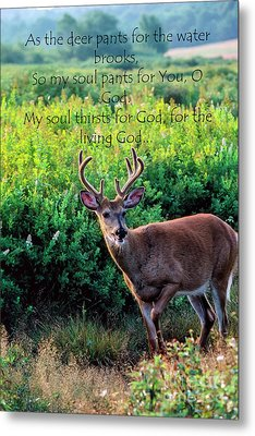 Metal Print featuring the photograph Whitetail Deer Panting by Thomas R Fletcher