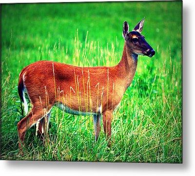 Whitetailed Deer Metal Print by Susie Weaver
