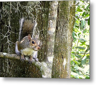 Who Goes There Metal Print by Terri Mills